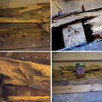 Woodworm floors
